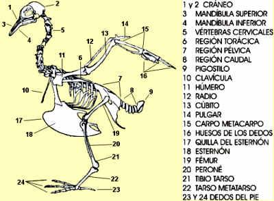 external image esqueletotexto.jpg